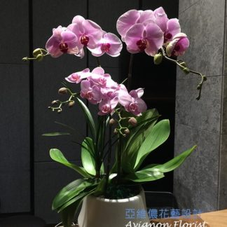 Two types of orchids