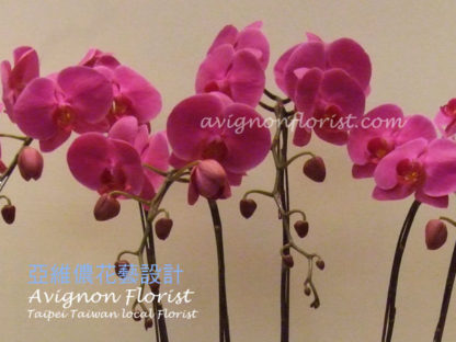 Close up of orchid blossoms. Avignon florist in Taipei, Taiwan